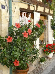 Nerac   Flowers adorn the streets every wherein Nerac