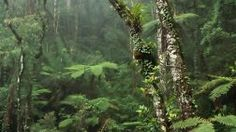 Damp Misty Rainforest Nature Forests Lush Forest HD Free Live Wallpaper