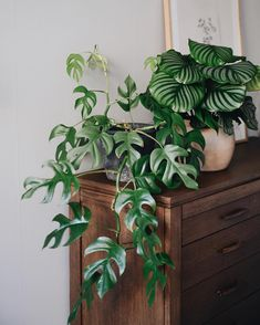 20 stunning indoor decorative plants to bring freshness 7 Best Picture For house plants decor hallway For Your Taste You are looking for something, and it is going to tell you exactly what you are loo Small Indoor Plants, Flower Pot Design, Decoration Plante, House Plants Decor, Porch Plants, Plants Are Friends, Interior Plants, Plant Design, Green Plants