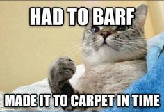 Whew! Had to Barf. Made it to the carpet in time!
