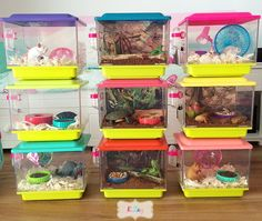 This is the cutest craft for our american girl dolls! make these adorable American girl pet cages