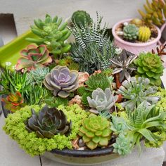 Succulents U. Hardiness Zones - - Cottage Hill - image 1 of 5 Water Wise Landscaping, Succulent Landscaping, Succulent Gardening, Container Gardening, Organic Gardening, Indoor Gardening, Cacti And Succulents, Planting Succulents, Planting Flowers
