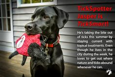 Take a bite out of ticks! TickSmart dog toy.