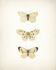 Antique++Butterfly+Illustration+Natural+by+HighStreetVintage,+$15.00