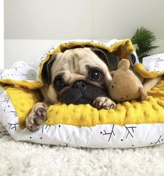 Puggle and Fluffy
