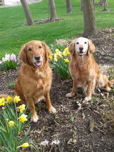 """May Mug Shots Photo Contest: """"Maxx and Sadie enjoying sunshine in the flowers"""" (Submitted by Jamie Stickney)"""
