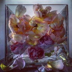 Roses by showstudio nick knight  13th June 2015