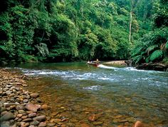 The Ulu Temburong National Park, Brunei's main nature reserve