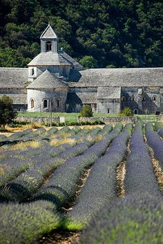 Abbaye de Senanque    The 12th century Cistercian abbey is in a steep valley near Gordes, Provence