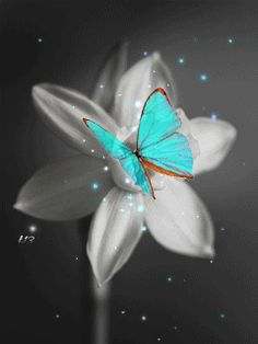 Gifs and Amazing Pictures Blue Butterfly Wallpaper, Butterfly Pictures, Flower Wallpaper, Wallpaper Backgrounds, Flowers Gif, Butterfly Flowers, Beautiful Butterflies, Glitter Graphics, Beautiful Gif