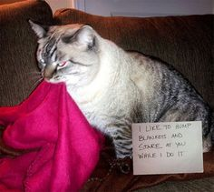 An epic gallery of cat shaming pictures that prove these cats are the naughtiest in the world. A hilarious cat shaming picture gallery. Funny Cat Memes, Funny Cat Videos, Funny Animal Pictures, Funny Photos, Funny Animals, Cute Animals, Funny Fails, Animals Dog, Funny Humor