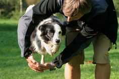 Teaching your dog is centered on building your relationship with your canine and establishing boundaries. Be firm but consistent and you'll see extraordinary results in your dog training adventures. Agility Training For Dogs, Basic Dog Training, Training Your Puppy, Dog Agility, Brain Training, Potty Training, Dog Minding, Dog Hacks, I Love Dogs