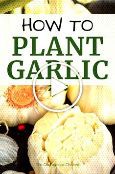 Learn how to plant garlic! Planting Garlic In Fall, Chicken, Breakfast, Easy, Tips, Plants, Food, Morning Coffee, Advice