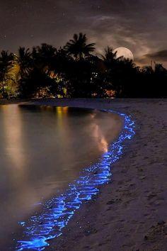 Plankton Shining by Olga Scheglova.