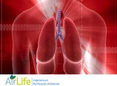 #airlife #aire #previsión #virus #hongos #bacterias #esporas #purificación  purificación de aire Airlife te dice. un estudio encontró que hay una relación entre la exposición a partículas contaminantes y pérdida de facultades cognitivas en adultos mayores. http://www.airlifeservice.com