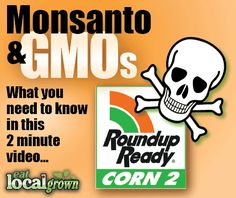 Is RoundUp safe to eat? Here's a 2 minute video that covers what you need to know about Monsanto and GMOs (Genetically Modified Organisms)...