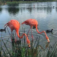 Fotos y Videos de Playa Bavaro, Punta Cana | FotoTrace