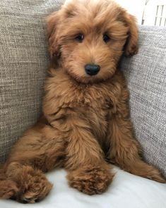 Best Dog Breeds: The Top 20 List - - Best Dog Breeds: The Top 20 List Cute Puppies & Dogs Does it get any cuter than this? What is your favorite dog breed? Little Puppies, Cute Dogs And Puppies, Baby Dogs, Pet Dogs, Doggies, Funny Puppies, Cute Funny Animals, Cute Baby Animals, Animals And Pets