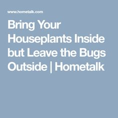 Bring Your Houseplants Inside but Leave the Bugs Outside | Hometalk