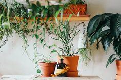 Como as plantas podem beneficiar a saúde mental e física na pandemia - Follow the Colours Ficus Elastica, Home Design, Prairie Planting, Plant Delivery, Peace Lily, Modern Kitchen Design, Kitchen Designs, Medicinal Plants, Color Of The Year