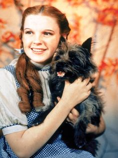 #JUDY GARLAND  1938  udy Garland (born Frances Ethel Gumm; June 10, 1922 – June 22, 1969) I love her movies!!