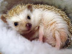 Ok,ok... I know hedge hogs aren't toys, but never the less, it's still something I want to play with.