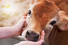 A senciência dos animais, porta aberta para outro entendimento - ANDA - Agência de Notícias de Direitos Animais