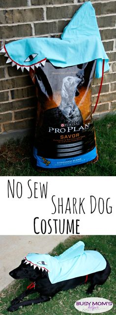 No Sew Shark Dog Costume / by BusyMomsHelper.com #ad #PawsToSavor #client