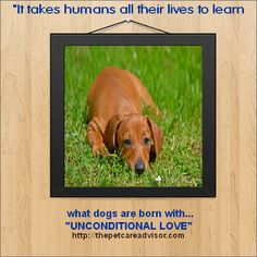 """This is my quote which applies to all my furry """"best friends""""."""