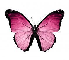 Morpho papillon rose www.pont-roche.com