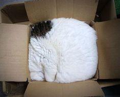 Des Chats tétus qui arrivent à se fourrer dans un endroit trop petit pour eux ....... parce qu'ils l'ont décidé !!