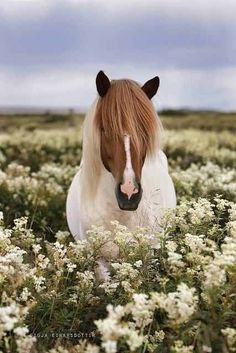 Horse Beauty, my love for horses!