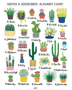 Lily Kao Design: Cactus & Succulents Alphabet Chart — Little Village