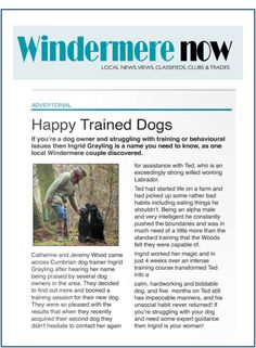 You Can Easily Train Your Dog If You Follow These Tips ** Read more info by clicking the link on the image. #DogTrainingTips