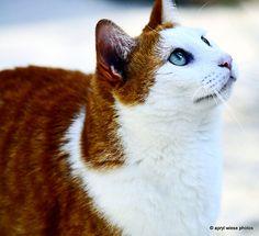 Fancy Feline (via Apryl Wiese)