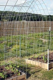 concrete reinforcing wire makes stronger trellises and tomato cages -
