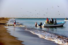 """I looked at the beach while walking. The birds were chattering. The I remembered Tolstoy """" Happy families are all alike; every unhappy family unhappy in its own way."""" Fujairah Beach, UAE.null"""