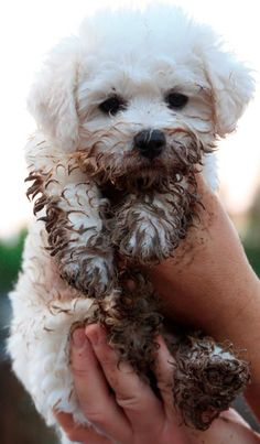 "Puppy-Dog: ""Mud? What makes you think I was in the mud?!"""