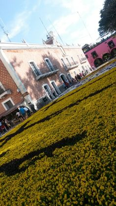 Tapete floral, El Calvario, Semana Santa