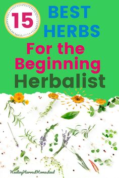 Are you ready to start learning to become an herbalist? Are you wondering where to start? Here are 15 herbs that are perfect for the beginning herbalist. They have multiple uses, and they're safe for most people. Find out how to use herbs for your health! #herbalism #howtobecome #forbeginners #howtobe #apothecary #medicine #remedies #healing #healingharvesthomestead Natural Remedies For Migraines, Natural Health Remedies, Natural Cures, Herbal Remedies, Health And Wellness Quotes, Health And Wellbeing, Health Tips, Herbs For Health, Healthy Herbs