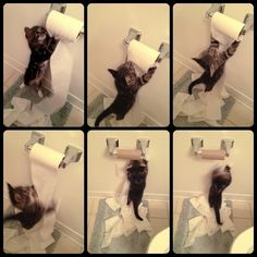 Does your kitten like this exercise?