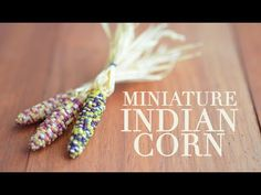 INDIAN CORN • polymer clay tutorial - YouTube