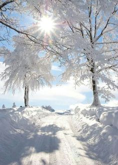 Photo: Sun shining on a beautiful winter wonderland! Winter Love, Winter Snow, Winter Christmas, Winter White, Snow White, Christmas Morning, Christmas Presents, Christmas Time, White Pic