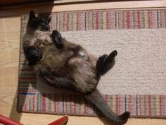Stubby on his back! Submissive, Rugs, Animals, Home Decor, Farmhouse Rugs, Animales, Decoration Home, Animaux, Room Decor