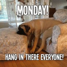 Searching of monday memes collections? Here we have funny Monday memes to descried feelings that week is ends very fast but on Monday, that day is very long and hectic. Funny Monday Memes, Happy Monday Quotes, Monday Humor Quotes, Funny Dog Memes, Memes Humor, Funny Dogs, Funny Quotes, Quotes Friday, Friday Memes