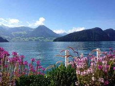 What's On in Zurich End of August into September 2014 Views across the lake from Vitznau Park Hotel, September 2014, Rose, Switzerland, Restaurants, Champagne, Hotels, Board, Blog
