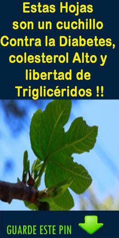 Estas hojas son un cuchillo contra la diabetes, colesterol alto y libertad de Triglicéridos.