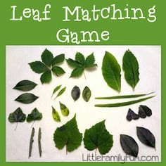 A simple Nature Activity for kids: Leaf Matching Game!