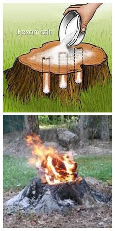 Easiest Way to Remove a Tree Stump Yourself Painlessly + Video – DIY Tutorials