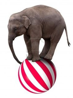 Image detail for -Baby Circus Elephant Balancing On A Big Ball Royalty Free Stock ...